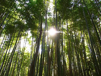 嵯峨野嵐山2