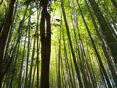 嵯峨野嵐山4