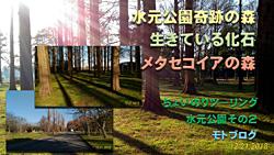 水元公園2