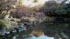 旧古河庭園写真12