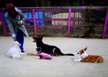 わんちゃんの保育園2