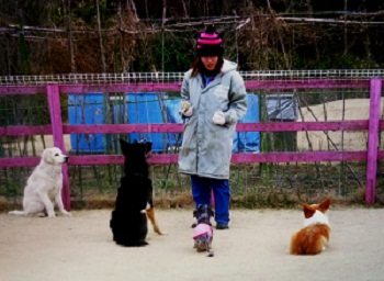 ワンちゃんの保育園3