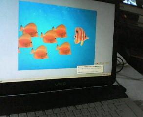 20070512_139361.jpg