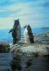 イワトビペンギン@新江ノ島水族館