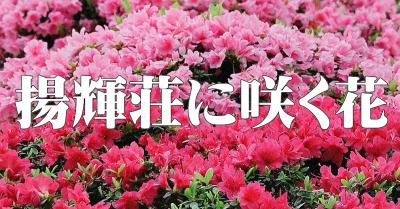 揚輝荘に咲く花