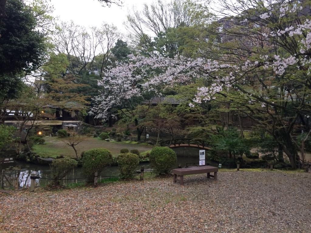 北園桜の春