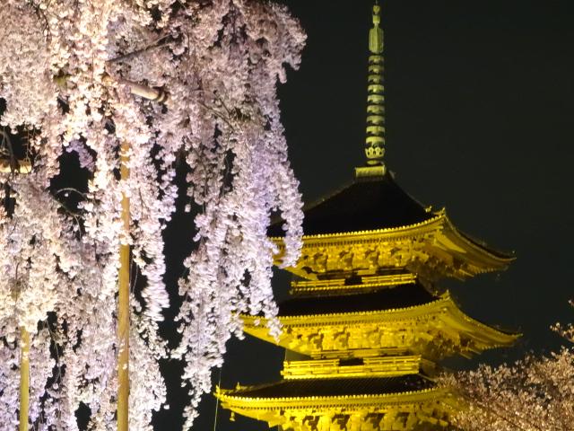 東寺五重塔と不二桜