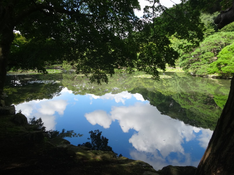 池の中に空