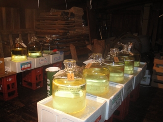 熟成中の純米大吟醸の斗瓶