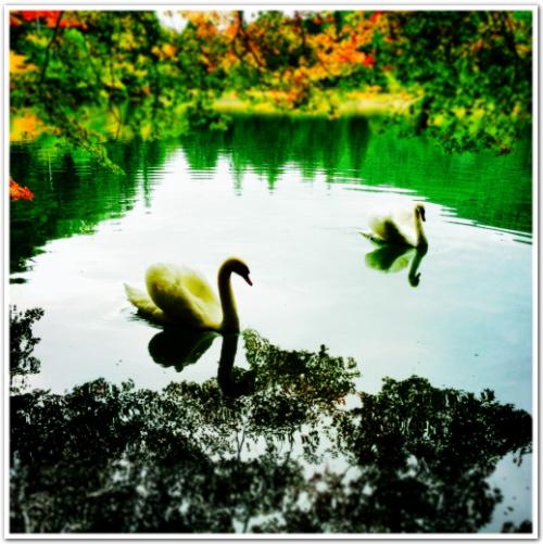 swan lake par anyan