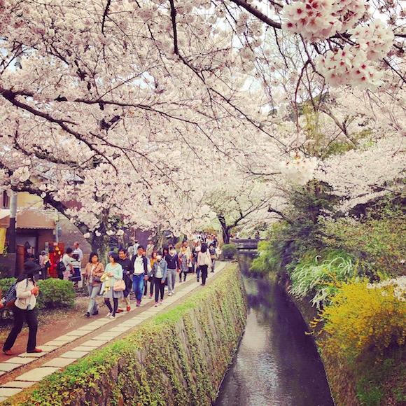 哲学の道 桜 anyan