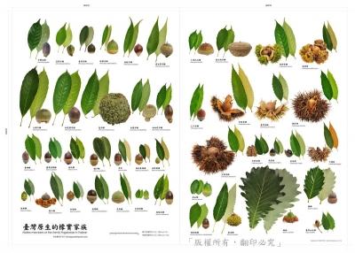 木の実.jpg