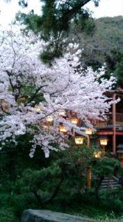 西公園の夜桜