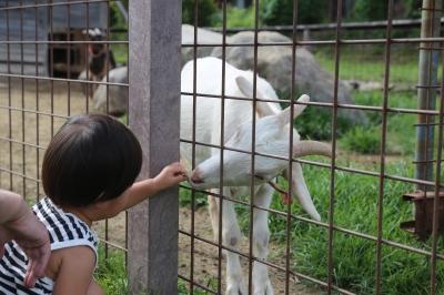 八ヶ岳 動物 3