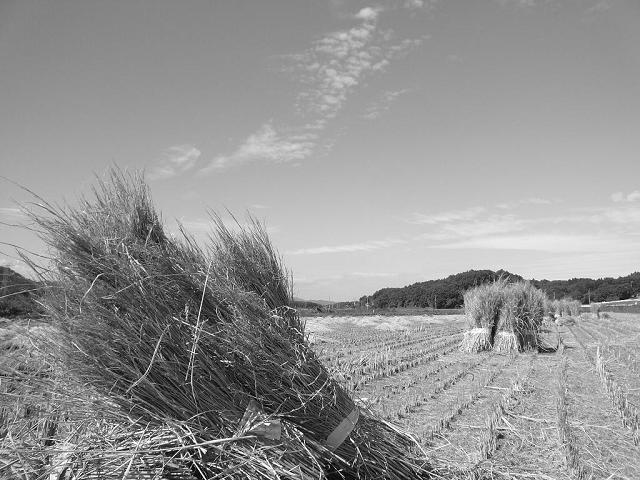 お米収穫後の風景
