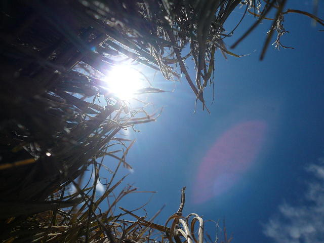 太陽と稲藁
