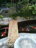 櫛田神社の鯉