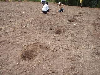 苗木植え替え前の測定