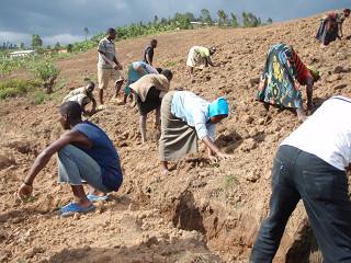 よく働く農民