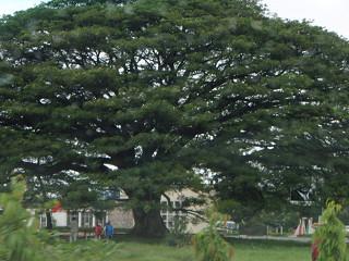 この木なんの木