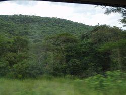 Forest in Tanzania