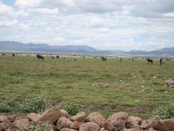 Ngorongoro national park3