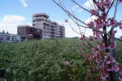 桜とりんごとサンタハウス