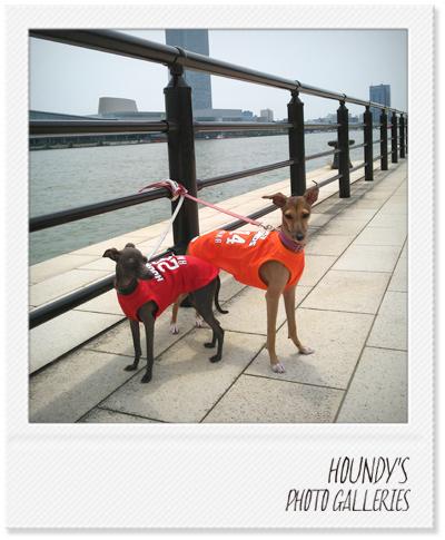 イタリアングレーハウンド服 名入れ犬服