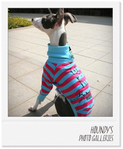 イタリアングレーハウンド写真 犬服