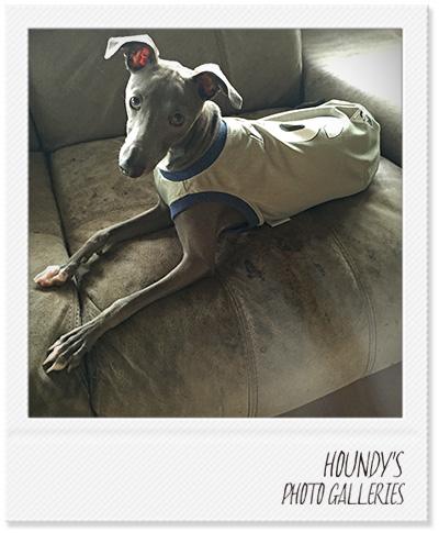 イタリアングレーハウンド タンクトップ 犬服