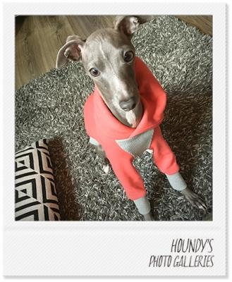 イタリアングレーハウンドのパーカー犬服