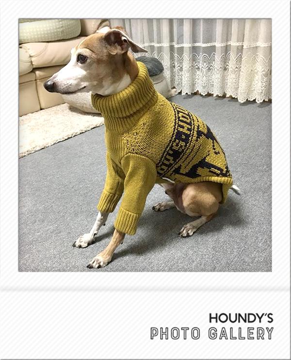 イタグレ セーター