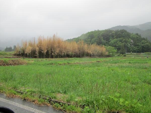 yoshihama052809