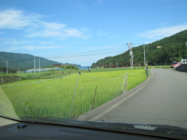 yoshihama090203