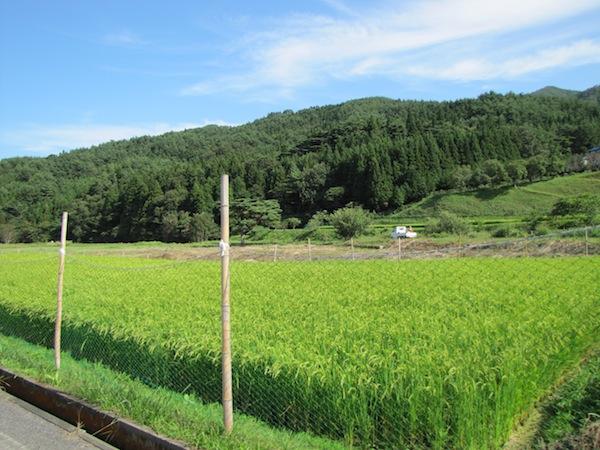 yoshihama090205