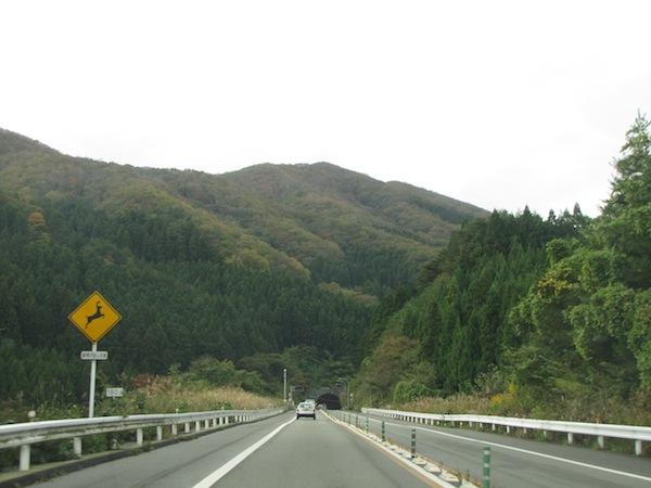 natsumushiyama102609