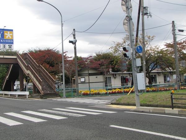 natsumushi02606
