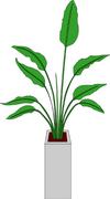 富山ブライダルエステアンジェ・ド・ポー観葉植物イラスト