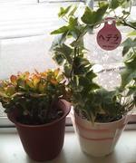 富山ブライダルエステアンジェ・ド・ポー観葉植物