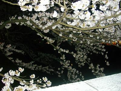 富山ブライダルエステアンジェ・ド・ポー2011.4.10松川べり桜3