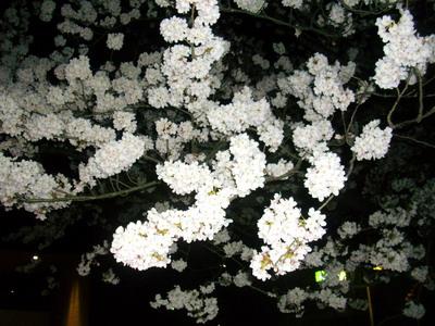 富山ブライダルエステアンジェ・ド・ポー2011.4.10松川べり桜2