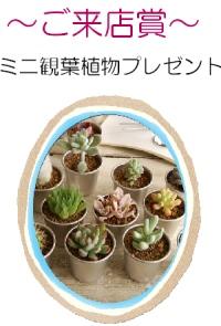 16・3観葉植物画像.JPG