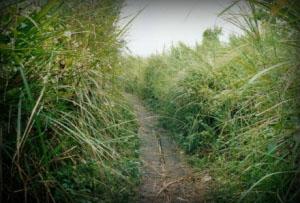 草ぼうぼうの道