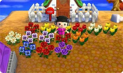 お花増えた