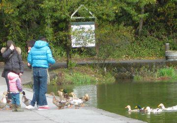 塩沢湖の鴨