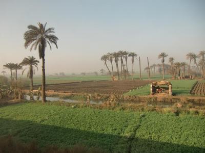 エジプトの田園地帯