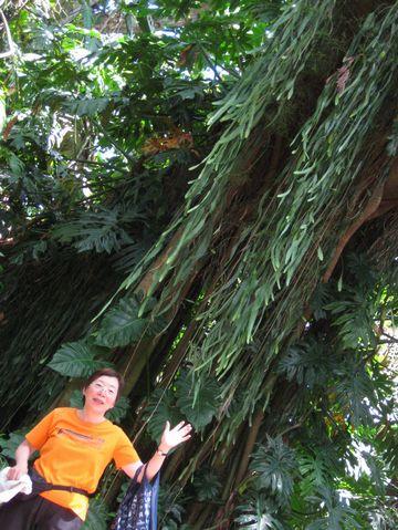 ワヒアロ植物園で