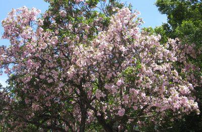 きれいなピンクの花