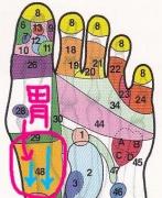 胃の反射区