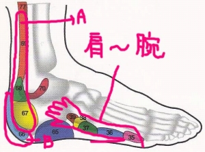 足の外側 反射区